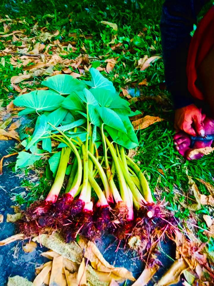 Organic root crops from the Mangarita Organic Farm in Capas, Tarlac.